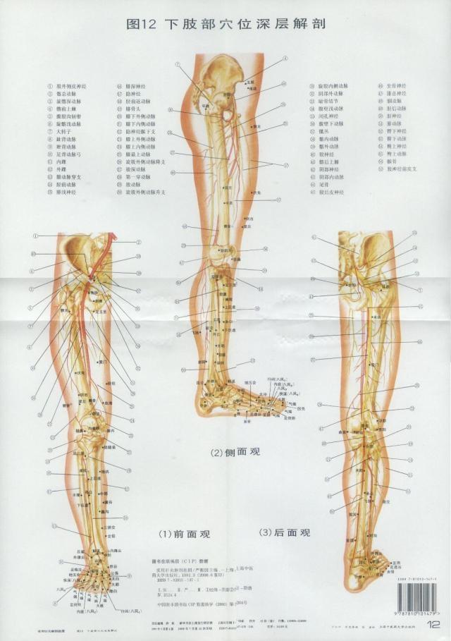 中医针灸经络视频_实用针灸解剖挂图_王氏中医_新浪博客